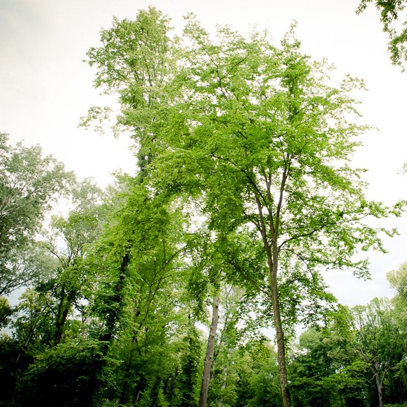 Naturbestattung Waldbestattung Baumbestattung Urne Oberrohrwald Oberrohrbach Klosterwald